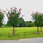 Robinson Park 2013